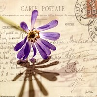 Vintage Letter and Purple Daisy Fine Art Print