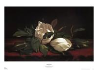 Magnolia Buds Fine Art Print