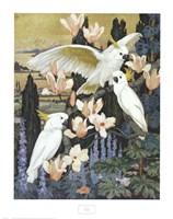 Cockatoos Fine Art Print