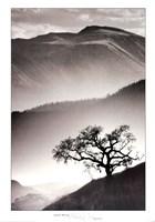 Black Oak Fine Art Print