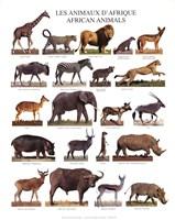 African Animals Fine Art Print