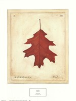 Oak Leaf Fine Art Print