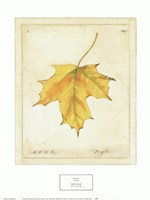 Maple Leaf Fine Art Print