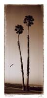 Palmae Palm I Fine Art Print