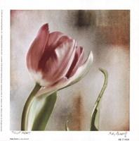Tulip Front Fine Art Print