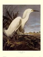 Snowy Heron or White Egret Giclee