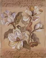 Magnolia l Fine Art Print