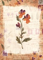 Posies with Patterns Fine Art Print