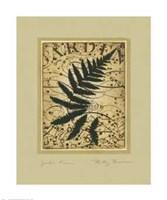 Garden Fern Fine Art Print