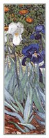 Irises in the Garden, Saint-Remy, c.1889 (detail) Fine Art Print