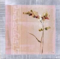 Graceful Orchids II Fine Art Print