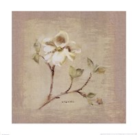 Dogwood Square Fine Art Print