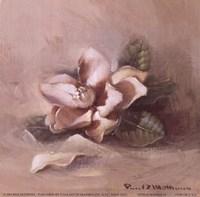 Sunlit Magnolia Fine Art Print