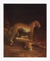 Two Leopards Playing In The Exeter Chang Framed Print