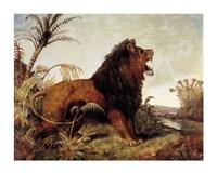 Lion in the Jungle Fine Art Print