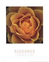 Elegance - Peach Rose Fine Art Print