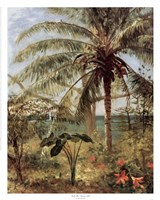 Palm Tree, Nassau 1892 Fine Art Print