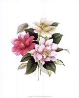 Camellias I Fine Art Print