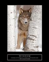 Wisdom - Gray Wolf Framed Print