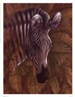 Safari Zebra Framed Print