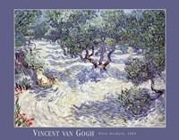 Olive Orchard Fine Art Print