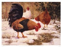 December Chickens Fine Art Print