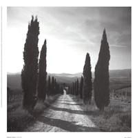 Mensano, Tuscany Framed Print