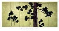 Pines Fine Art Print