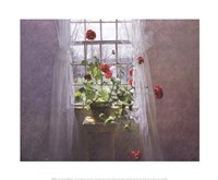 Red Geraniums (Small) Fine Art Print