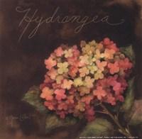 Midnight Hydrangea Framed Print