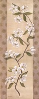 Asian White Cherry Fine Art Print