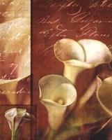 Calla Composite II Fine Art Print