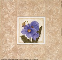 Himalayan Poppy Fine Art Print
