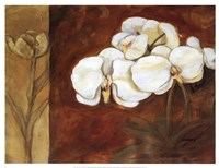 Luisia II Fine Art Print