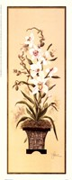 Orchid II Framed Print