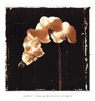 Flower Study I Fine Art Print