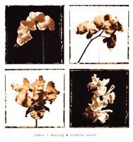 Orchid Suite Fine Art Print