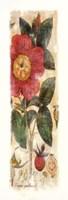 Rosa Gallica Fine Art Print