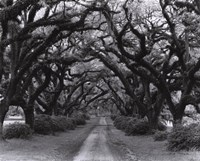 Path In The Oaks #2, Louisiana Framed Print