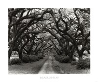 Path In The Oaks #2, Louisiana Fine Art Print
