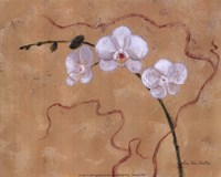 Morning Orchids Fine Art Print