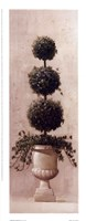 Roman Topiary ll Framed Print