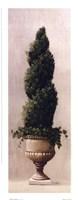 Roman Topiary l Framed Print