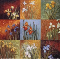 Iris Fields I Fine Art Print