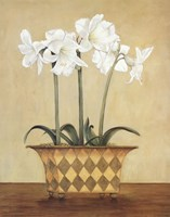 Amaryllis In Checkered Vase Fine Art Print