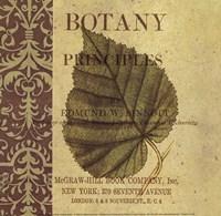 Botany Principles III Fine Art Print