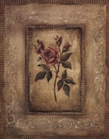 Savin Rose Framed Print