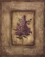 Savin Lilac Fine Art Print