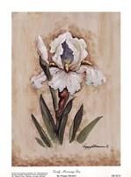 Early Morning Iris Fine Art Print