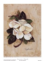 Summertime Magnolia Fine Art Print